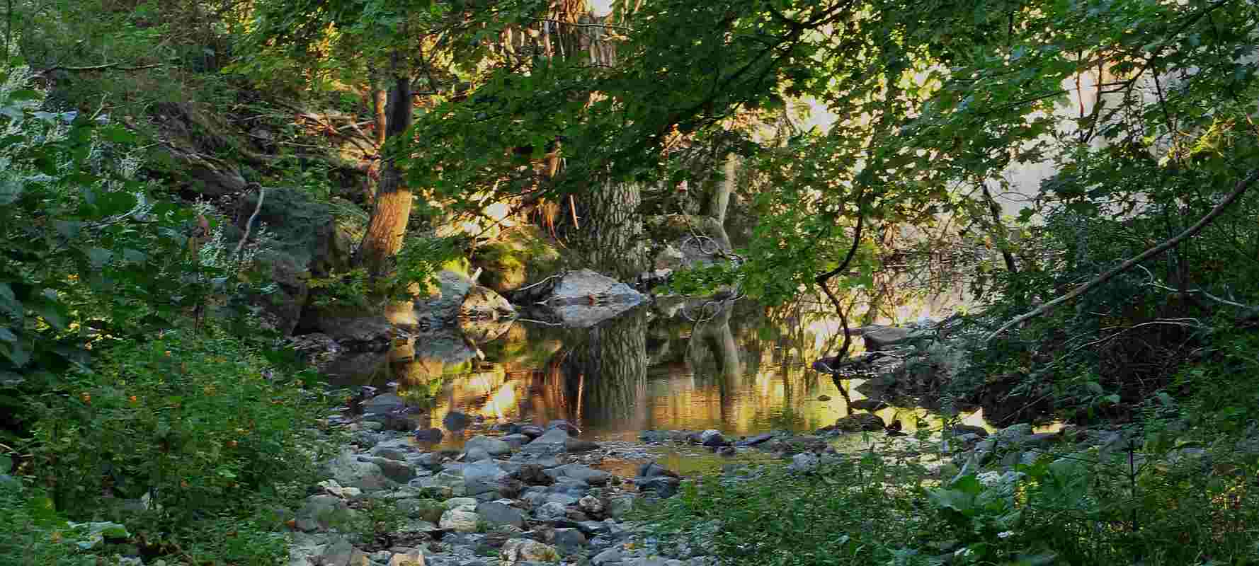 stream ecology intro Ecology comes from the greek words oikos (house or place where one lives) and logos (the study of) it is the study of the earth and its inhabitants specifically, ecology is defined as the study of the interactions among organisms, and their interaction with the nonliving parts of their environment.