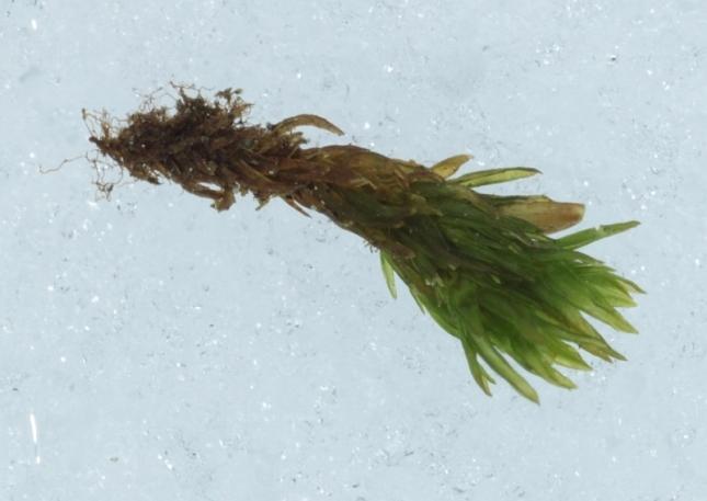 Moss bits
