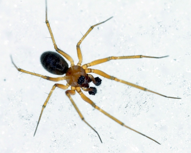 A snow prowling spider... but that's another blog.