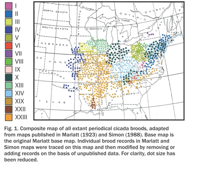 Brood II is our brood. As this map shows, we're at the very edge of the 17-year cicada's range. Map is from Cooley and colleagues, in the American Entomologist (vol. 55, p107, 2009; http://www.entsoc.org/PDF/Pubs/Periodicals/AE/AE-2009/summer/Cooley.pdf)