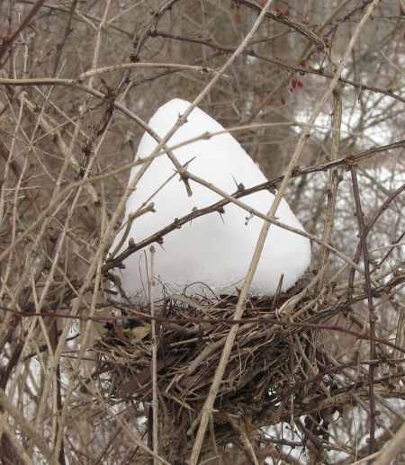 A bird nest in a well-protected location.