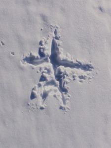 "A somewhat bigger creature formed this small ""snow angel"". Upon closer investigation, Conrad concluded that this pattern was created by a vole."