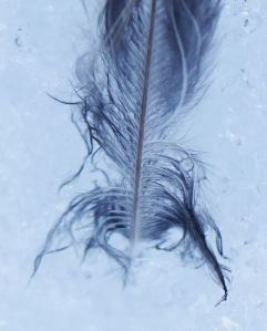 38Feather 3 March 12