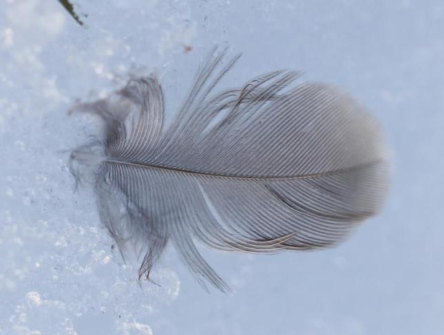 39Feather 4 March 12
