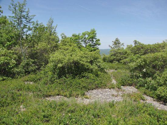 Oak Heath Barren near Sunset Rock in Taconic SP, Copake NY