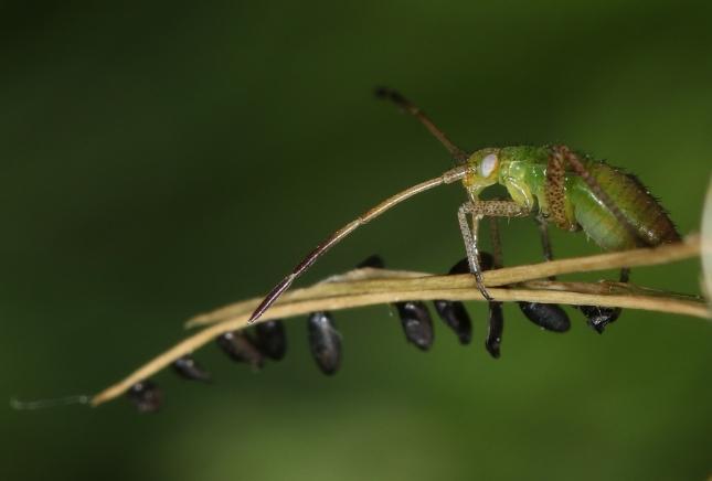 bug 3W5A1155