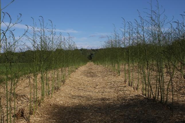 field 3W5A3698