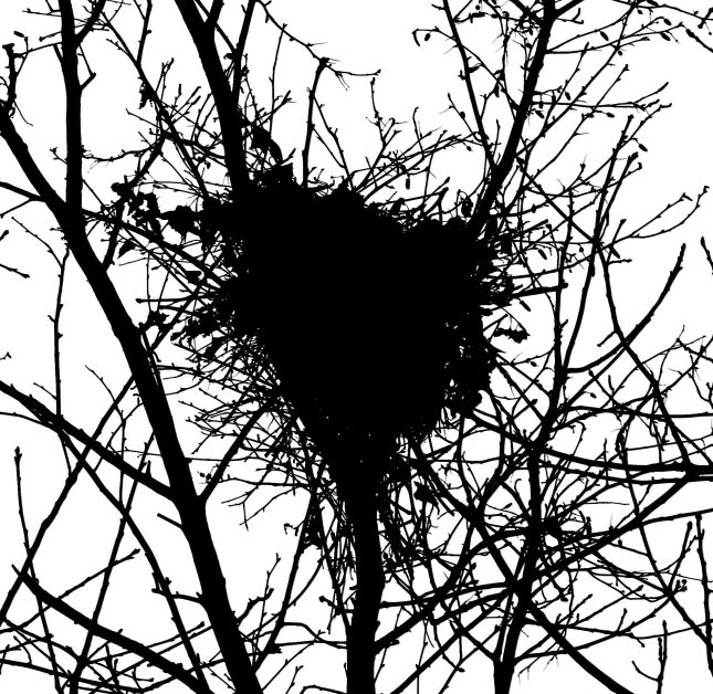 08 grey birch sql nest 3W5A9908