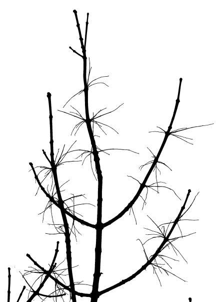 23 ash 3W5A0109