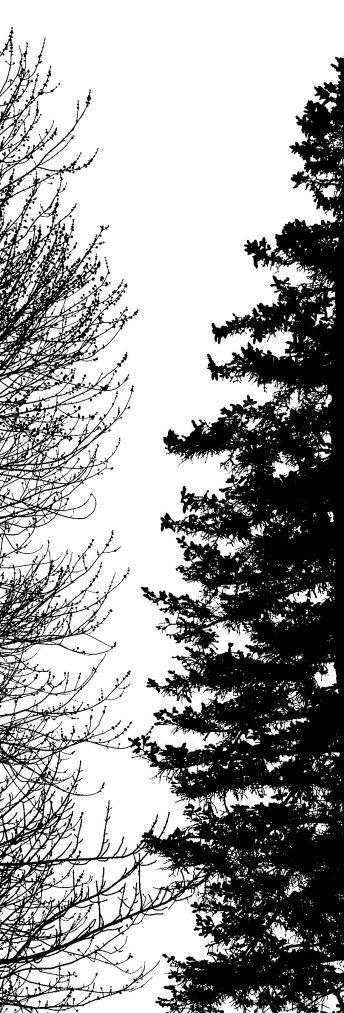 24 spruce 3W5A0024