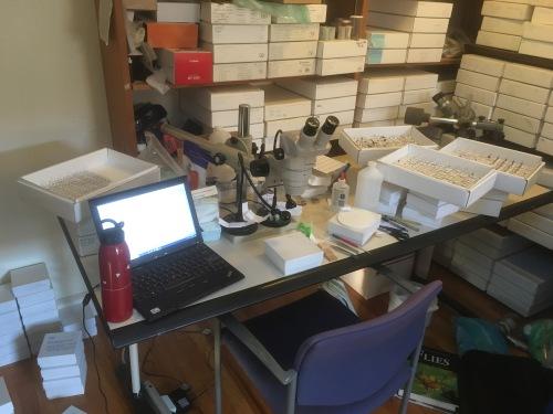 entomological work desk